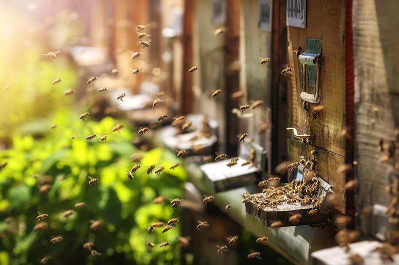 Honigproduktion (© photografiero - Fotolia.com)